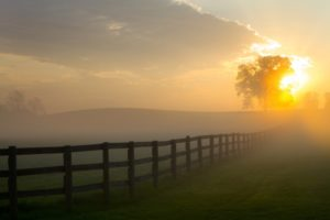 Foggy Pasture Sunrise