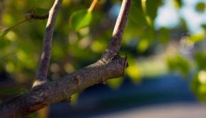 pruning-garden-tree-900W