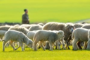 God Leads Like a Shepherd